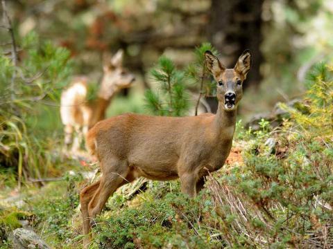Immagine notizia Fauna selvatica, chiarimenti sulla gestione